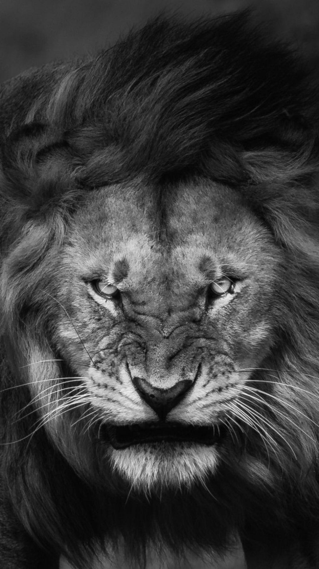 200 Lion Iphone Android Iphone Desktop Hd Backgrounds Wallpapers 1080p 4k 1080x1922 2020