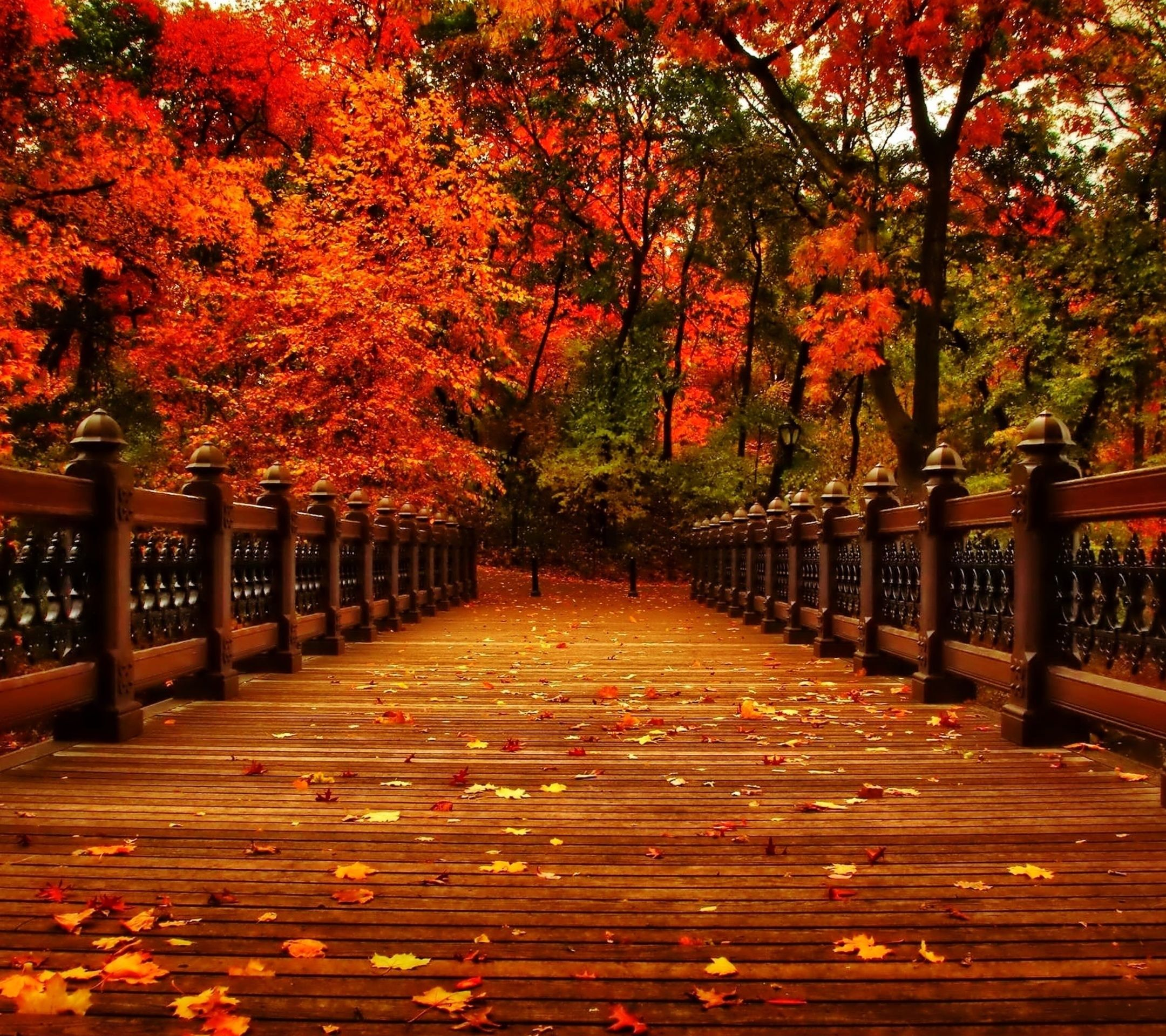 35 Fall Aesthetic Android Iphone Desktop Hd Backgrounds Wallpapers 1080p 4k 2160x1920 2020
