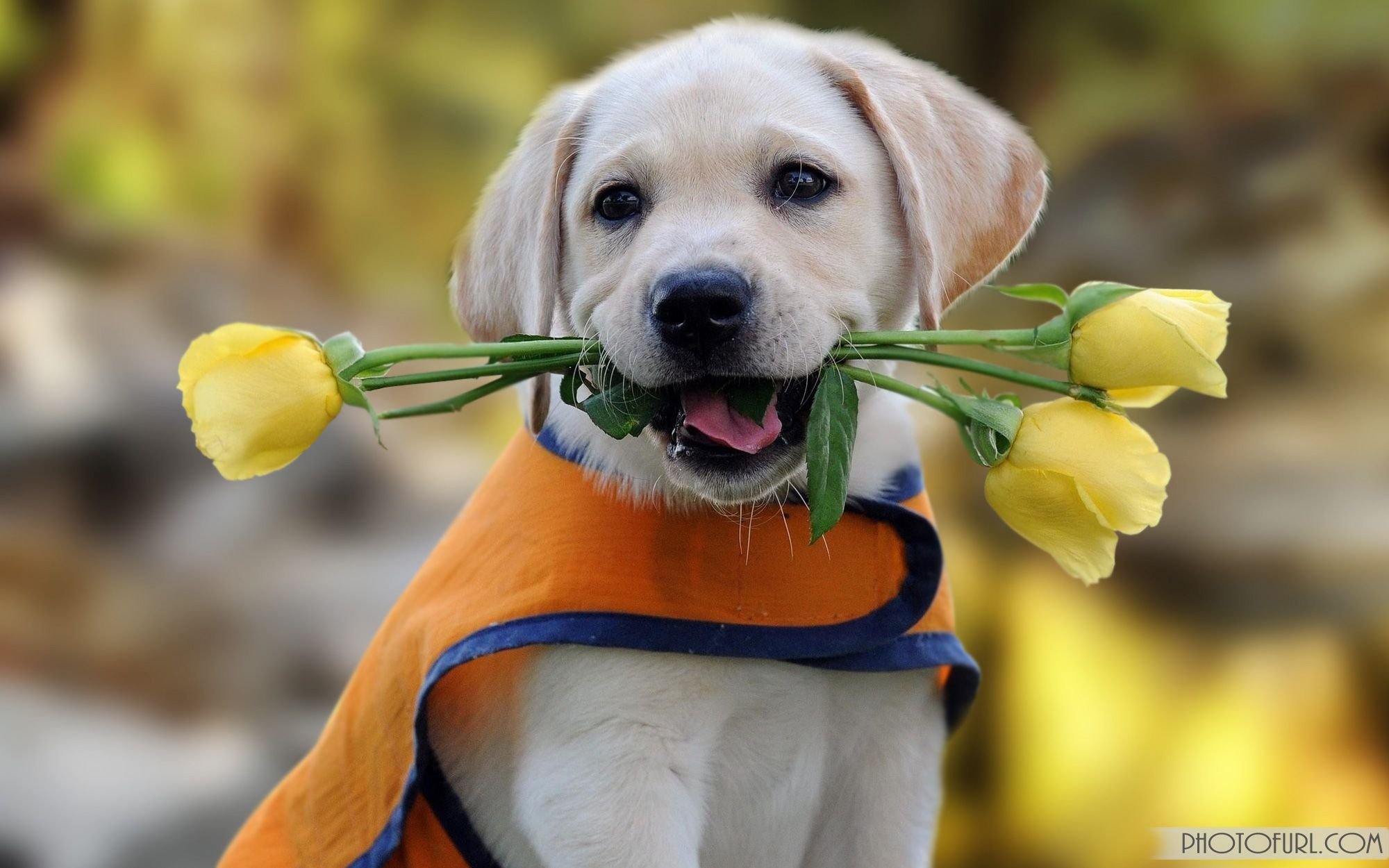 55 Cute Dog Android Iphone Desktop Hd Backgrounds Wallpapers 1080p 4k 2000x1250 2020