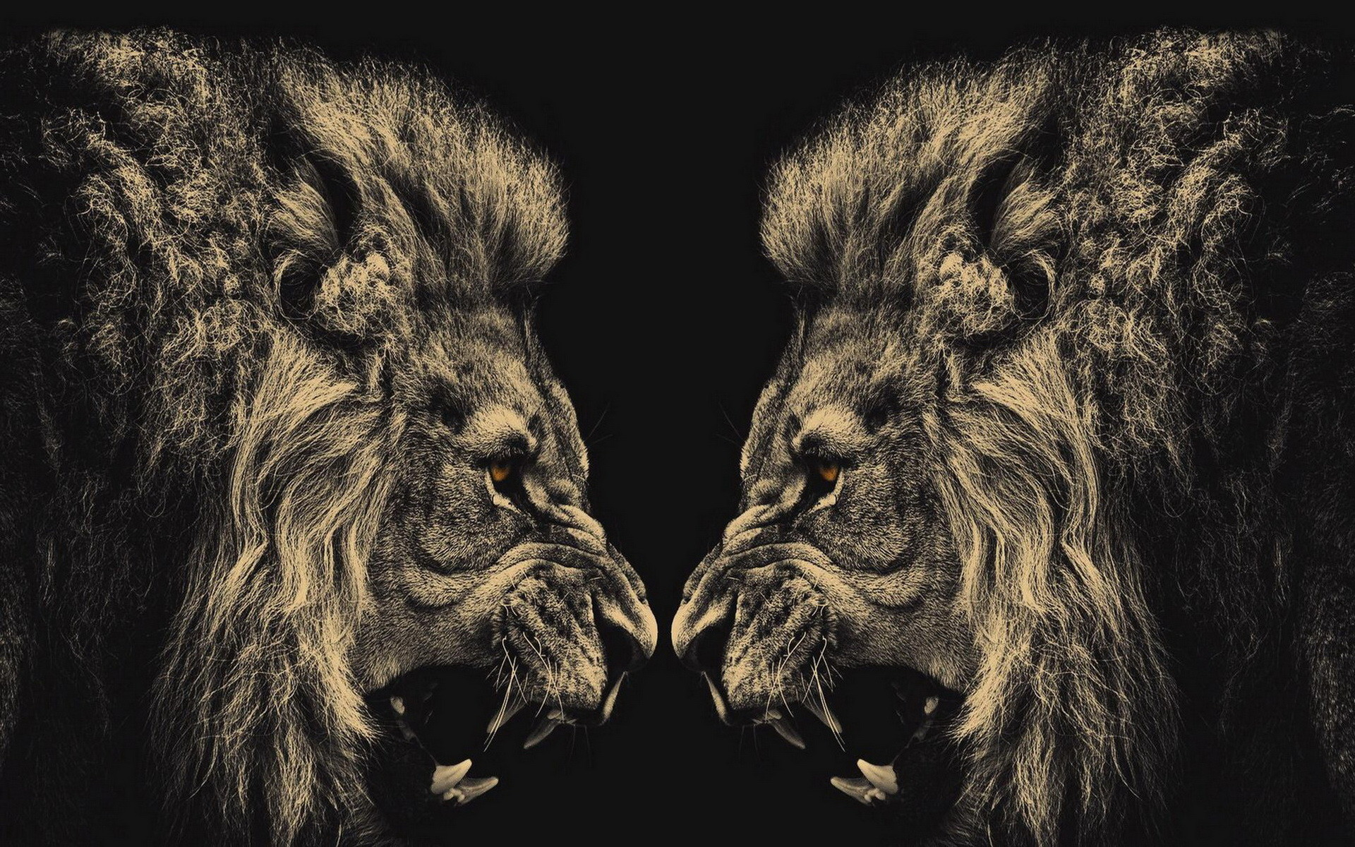 45 Lion Wallpaper Black And White Android Iphone Desktop Hd Backgrounds Wallpapers 1080p 4k 1920x1200 2020