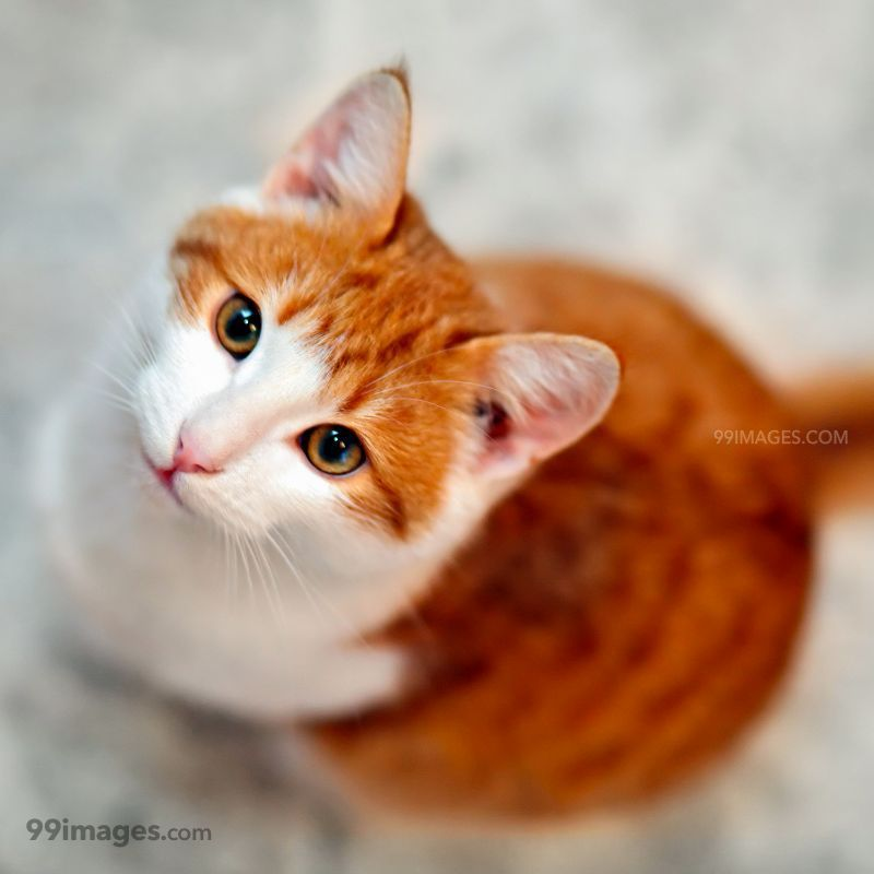 Cute Cat Images For Dp