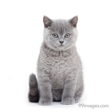 Best Cat HD Photos (Kitten, Funny, Cute, White, Black), Wallpapers, WhatsApp DP & Status Download