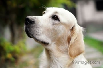 Best Dog HD Photos (Puppy, Funny, Cute, Labrador, German Shepherd), Wallpapers, WhatsApp DP & Status Download