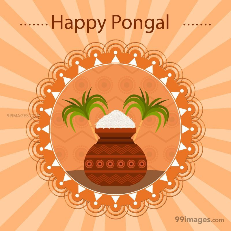 [14th January 2021] Happy Pongal (Pongal Vazhthukkal) WhatsApp DP Images, Wishes, Quotes, Messages HD (148103) - Pongal