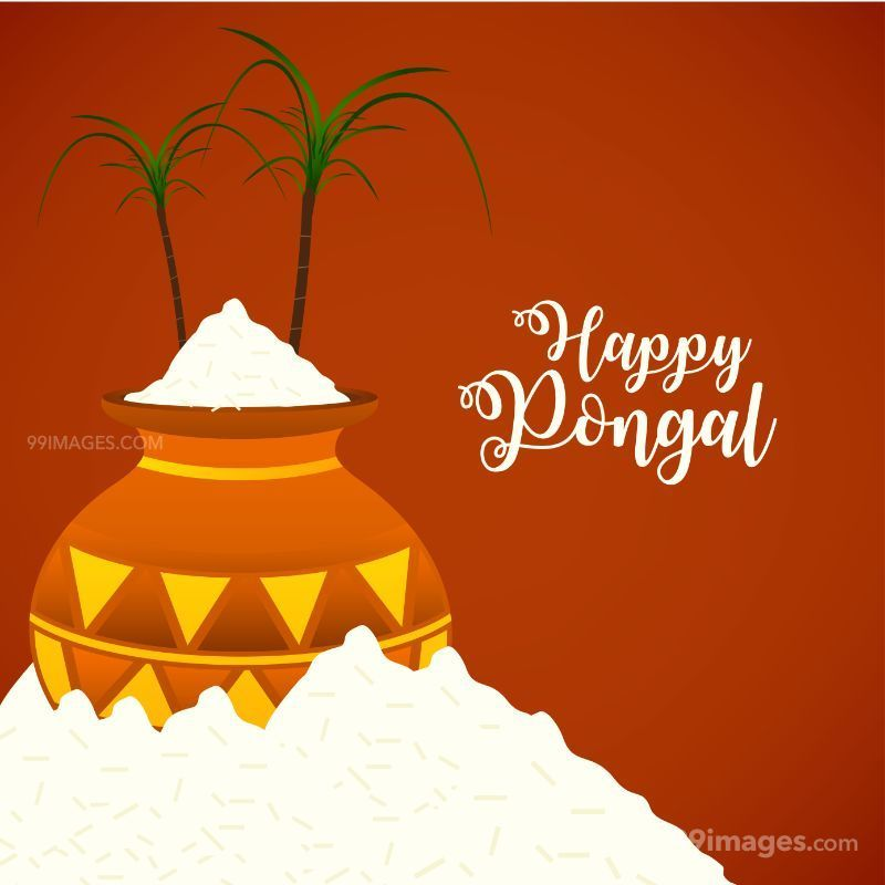 [15th January 2020] Happy Pongal (Pongal Vazhthukkal) WhatsApp DP Images, Wishes, Quotes, Messages HD (148016) - Pongal