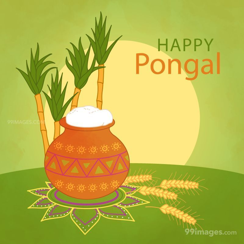 [15th January 2020] Happy Pongal (Pongal Vazhthukkal) WhatsApp DP Images, Wishes, Quotes, Messages HD (148150) - Pongal