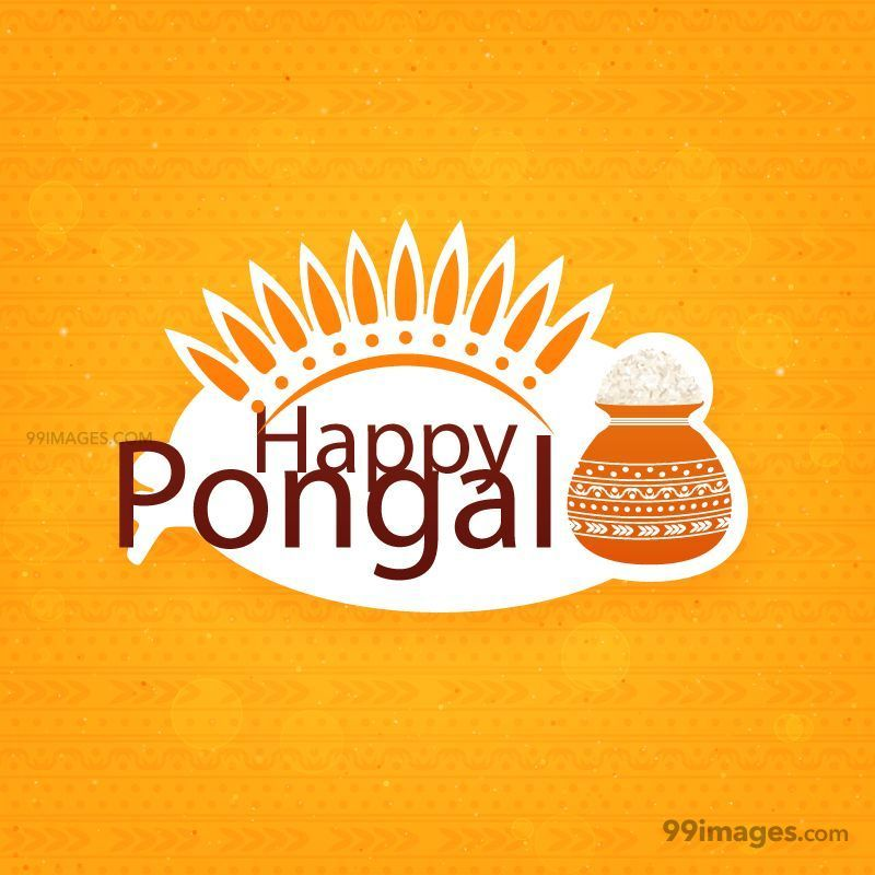 [15th January 2020] Happy Pongal (Pongal Vazhthukkal) WhatsApp DP Images, Wishes, Quotes, Messages HD (148051) - Pongal