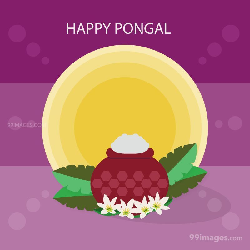 [15th January 2020] Happy Pongal (Pongal Vazhthukkal) WhatsApp DP Images, Wishes, Quotes, Messages HD (148137) - Pongal