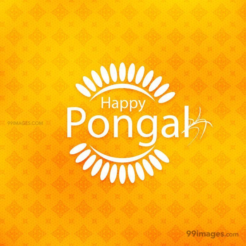 [15th January 2020] Happy Pongal (Pongal Vazhthukkal) WhatsApp DP Images, Wishes, Quotes, Messages HD (148050) - Pongal