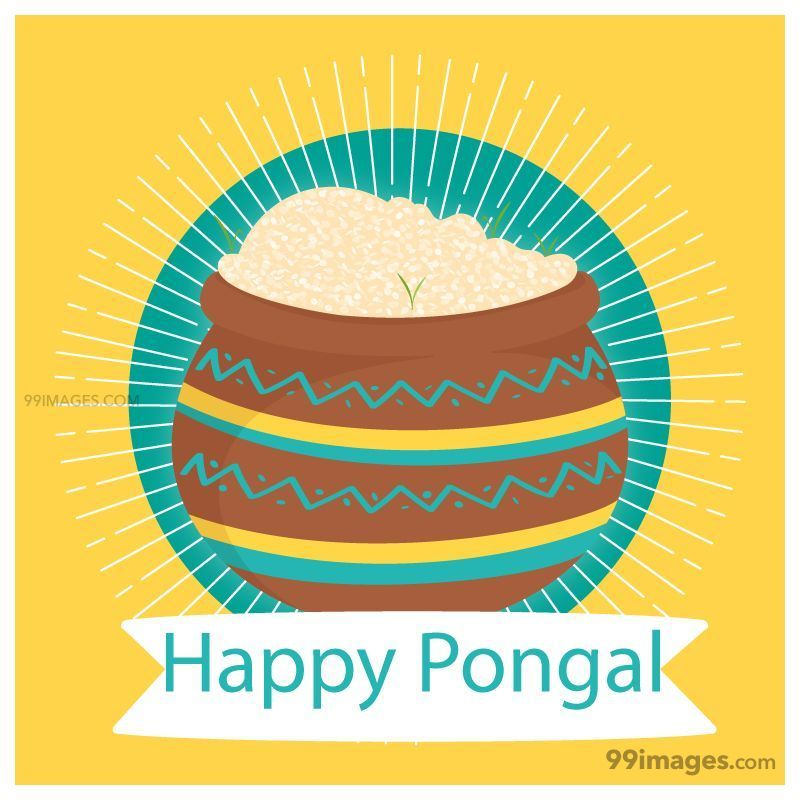 [15th January 2020] Happy Pongal (Pongal Vazhthukkal) WhatsApp DP Images, Wishes, Quotes, Messages HD (148155) - Pongal
