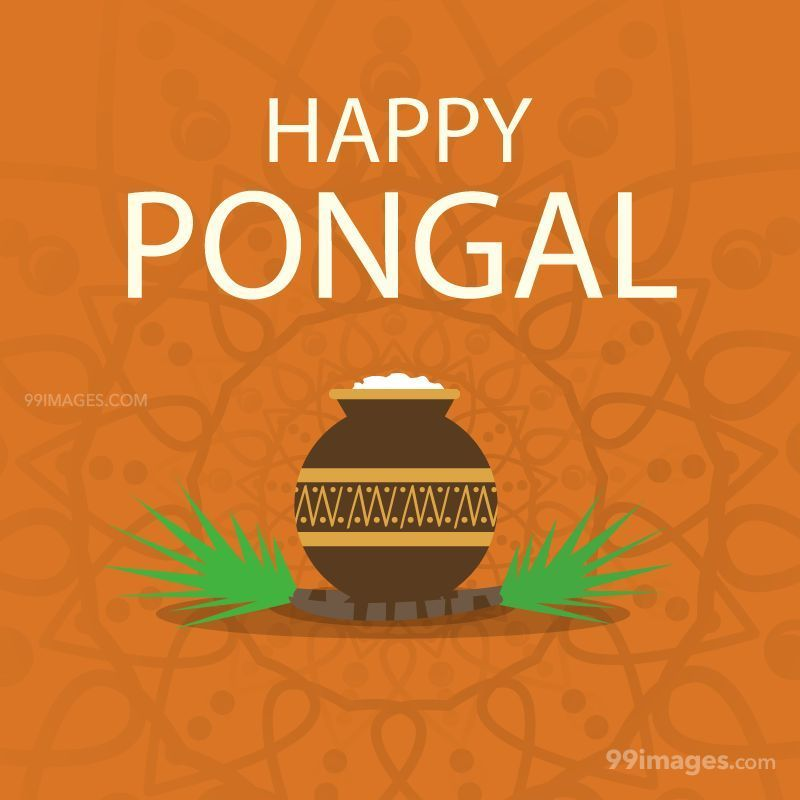 [15th January 2020] Happy Pongal (Pongal Vazhthukkal) WhatsApp DP Images, Wishes, Quotes, Messages HD (148067) - Pongal