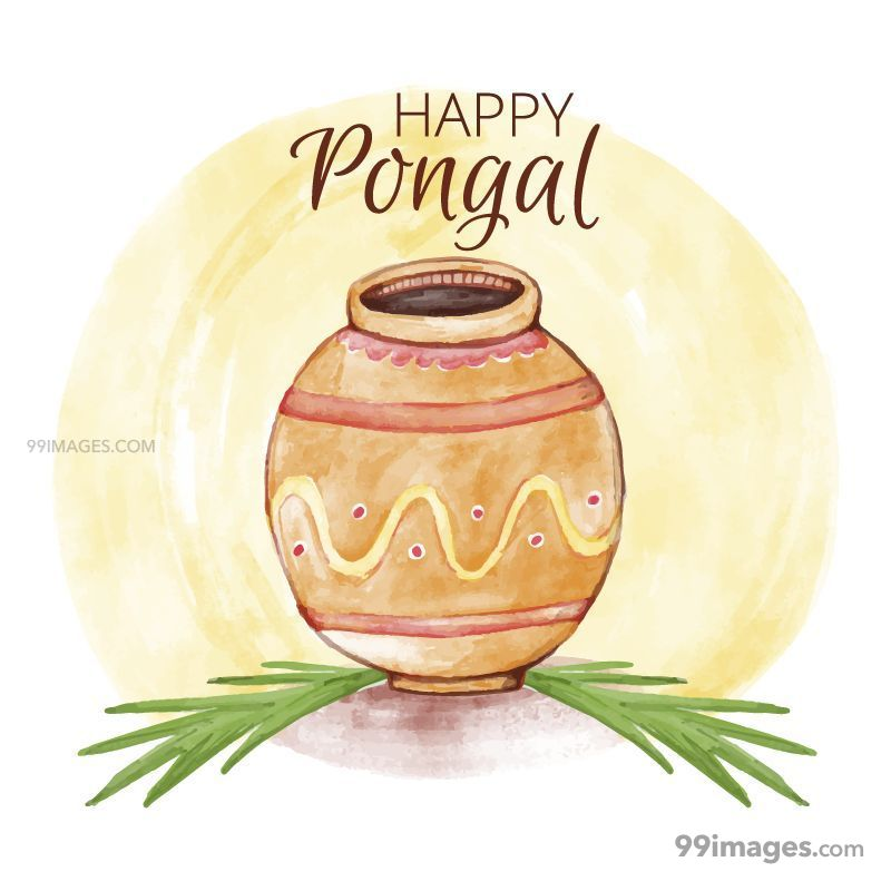 [15th January 2020] Happy Pongal (Pongal Vazhthukkal) WhatsApp DP Images, Wishes, Quotes, Messages HD (148143) - Pongal