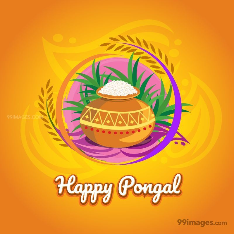 [15th January 2020] Happy Pongal (Pongal Vazhthukkal) WhatsApp DP Images, Wishes, Quotes, Messages HD (148088) - Pongal
