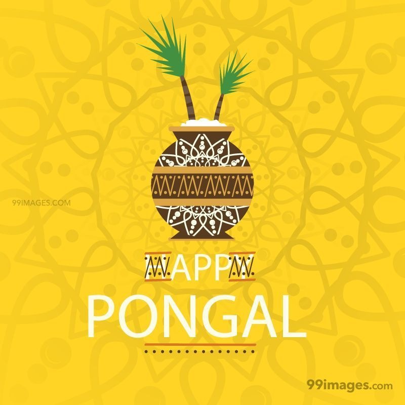 [15th January 2020] Happy Pongal (Pongal Vazhthukkal) WhatsApp DP Images, Wishes, Quotes, Messages HD (148066) - Pongal
