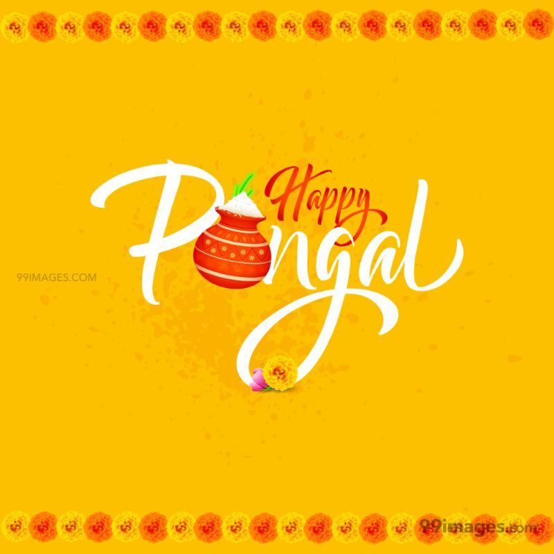 [15th January 2020] Happy Pongal (Pongal Vazhthukkal) WhatsApp DP Images, Wishes, Quotes, Messages HD (147988) - Pongal