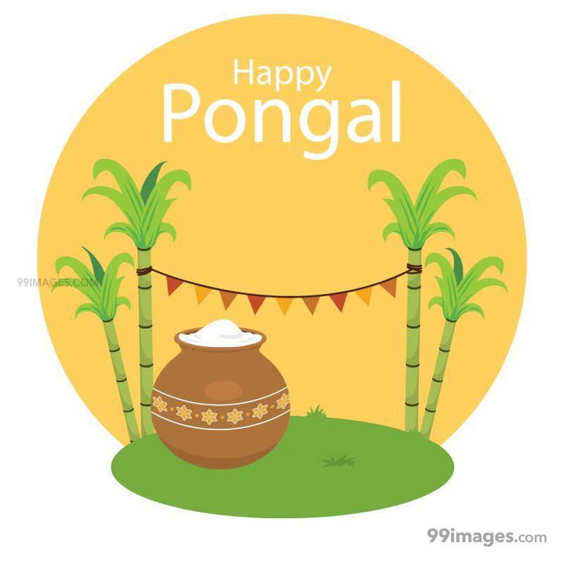 [15th January 2020] Happy Pongal (Pongal Vazhthukkal) WhatsApp DP Images, Wishes, Quotes, Messages HD (148072) - Pongal