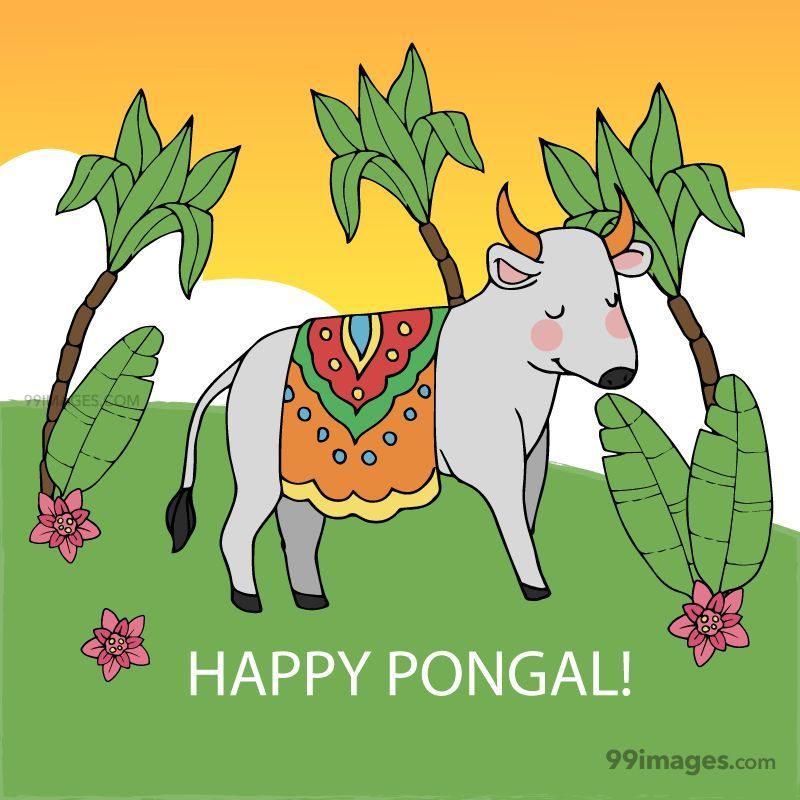 [15th January 2020] Happy Pongal (Pongal Vazhthukkal) WhatsApp DP Images, Wishes, Quotes, Messages HD (148170) - Pongal