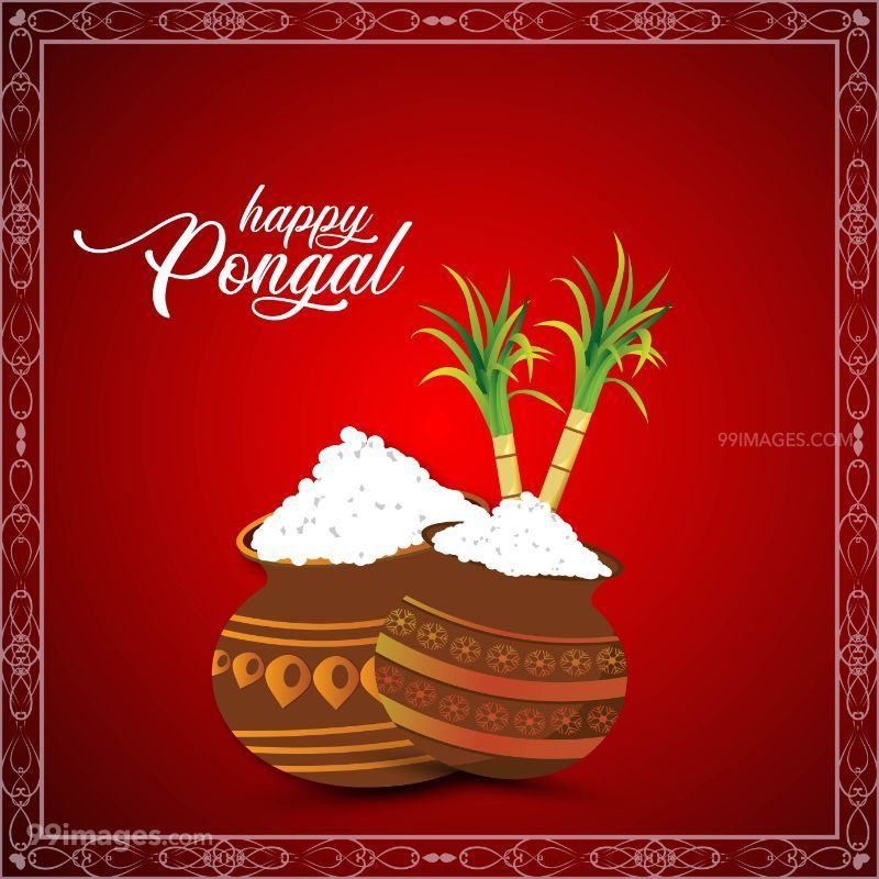 [15th January 2020] Happy Pongal (Pongal Vazhthukkal) WhatsApp DP Images, Wishes, Quotes, Messages HD (148038) - Pongal