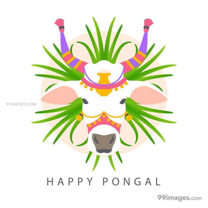 [15th January 2020] Happy Pongal (Pongal Vazhthukkal) WhatsApp DP Images, Wishes, Quotes, Messages HD (148136) - Pongal