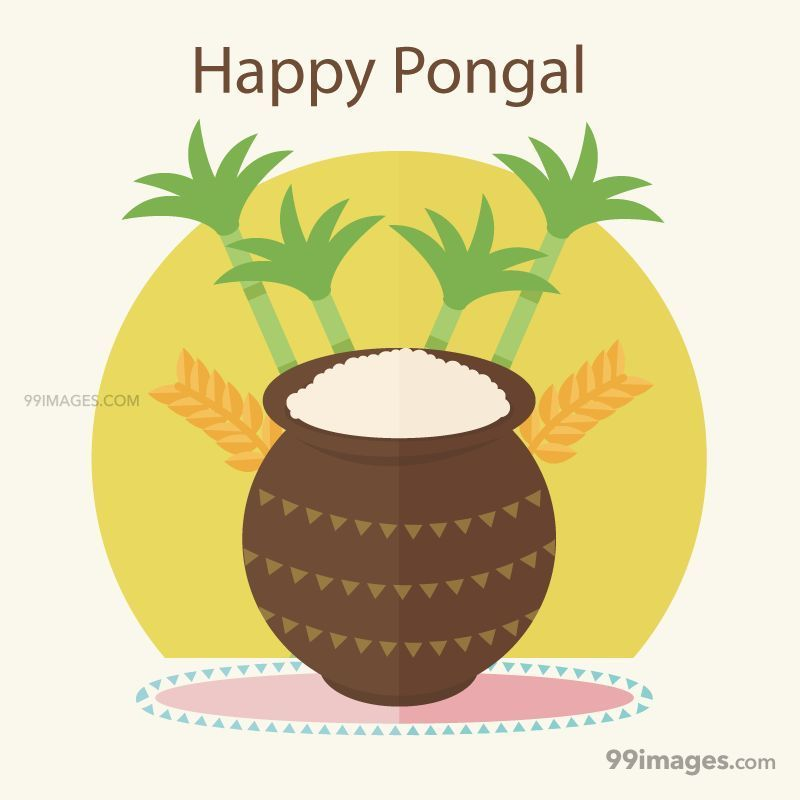 [15th January 2020] Happy Pongal (Pongal Vazhthukkal) WhatsApp DP Images, Wishes, Quotes, Messages HD (148105) - Pongal
