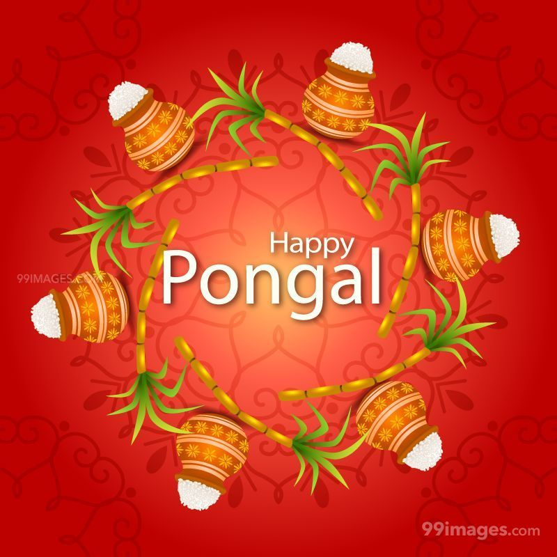[15th January 2020] Happy Pongal (Pongal Vazhthukkal) WhatsApp DP Images, Wishes, Quotes, Messages HD (148054) - Pongal