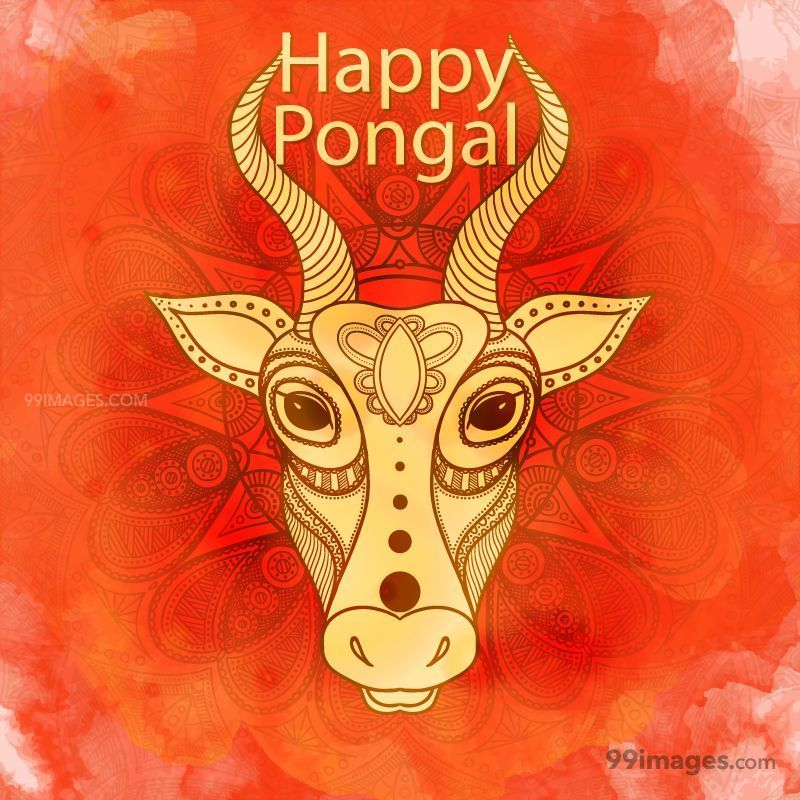 [15th January 2020] Happy Pongal (Pongal Vazhthukkal) WhatsApp DP Images, Wishes, Quotes, Messages HD (148092) - Pongal