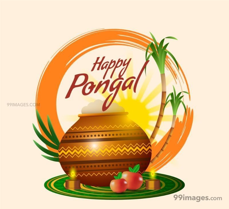[15th January 2020] Happy Pongal (Pongal Vazhthukkal) WhatsApp DP Images, Wishes, Quotes, Messages HD (148177) - Pongal