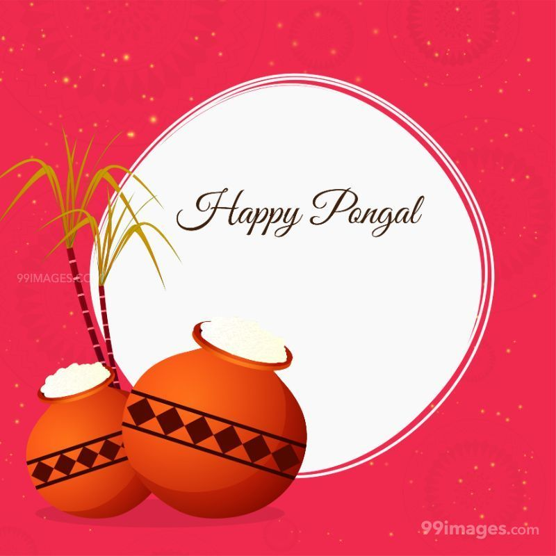 [15th January 2020] Happy Pongal (Pongal Vazhthukkal) WhatsApp DP Images, Wishes, Quotes, Messages HD (148031) - Pongal