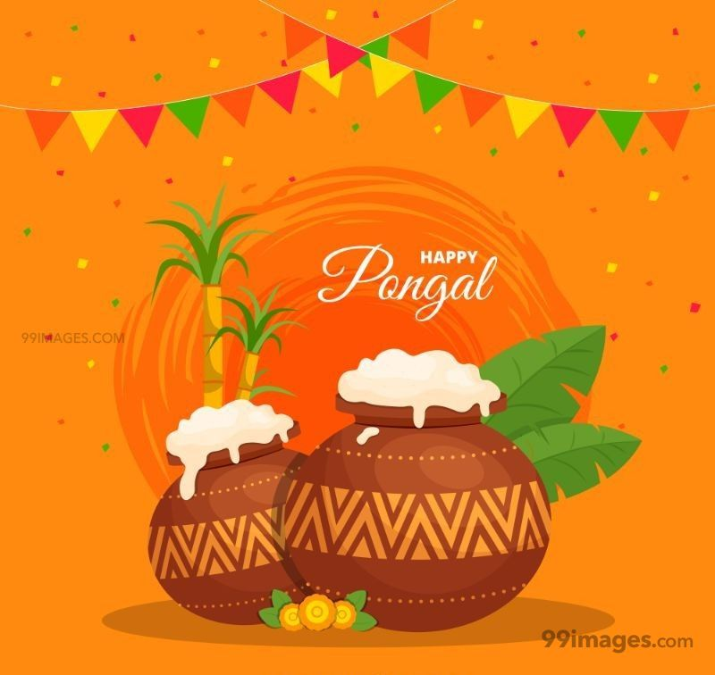 [15th January 2020] Happy Pongal (Pongal Vazhthukkal) WhatsApp DP Images, Wishes, Quotes, Messages HD (148163) - Pongal