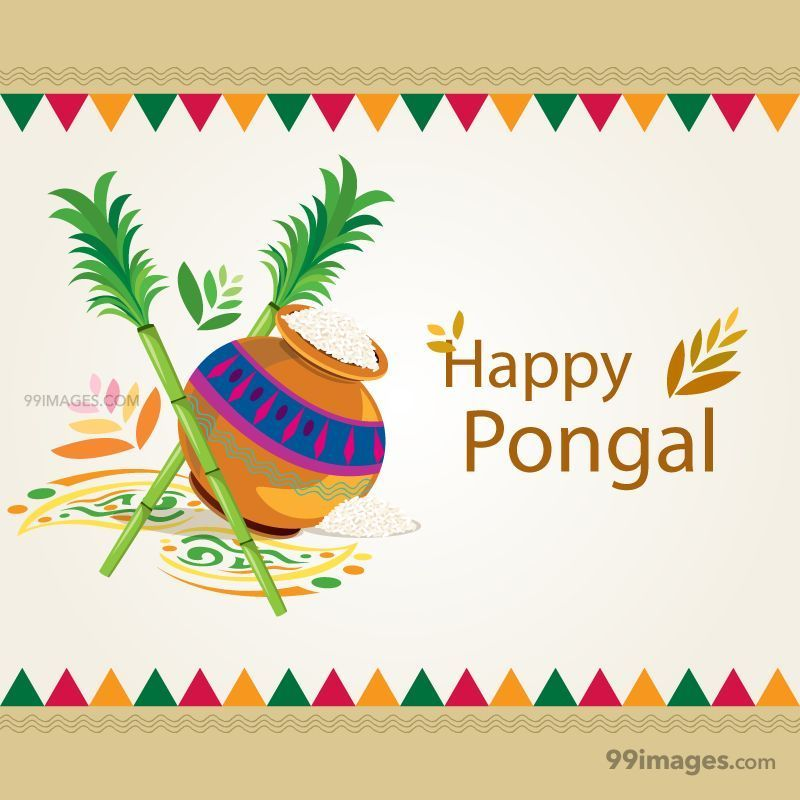 [15th January 2020] Happy Pongal (Pongal Vazhthukkal) WhatsApp DP Images, Wishes, Quotes, Messages HD (148089) - Pongal