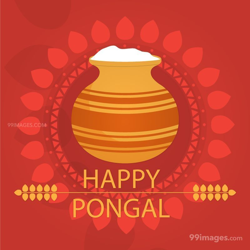[15th January 2020] Happy Pongal (Pongal Vazhthukkal) WhatsApp DP Images, Wishes, Quotes, Messages HD (147976) - Pongal