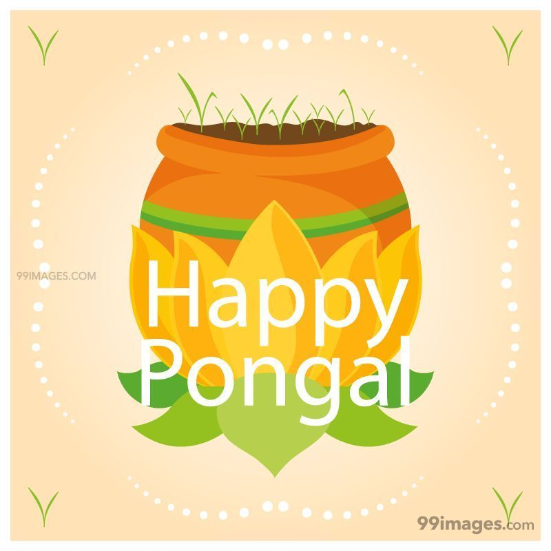 [15th January 2020] Happy Pongal (Pongal Vazhthukkal) WhatsApp DP Images, Wishes, Quotes, Messages HD (148156) - Pongal
