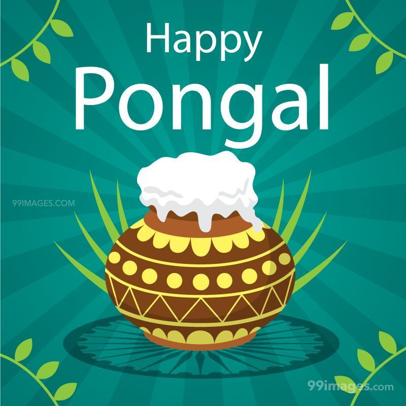 [15th January 2020] Happy Pongal (Pongal Vazhthukkal) WhatsApp DP Images, Wishes, Quotes, Messages HD (148061) - Pongal
