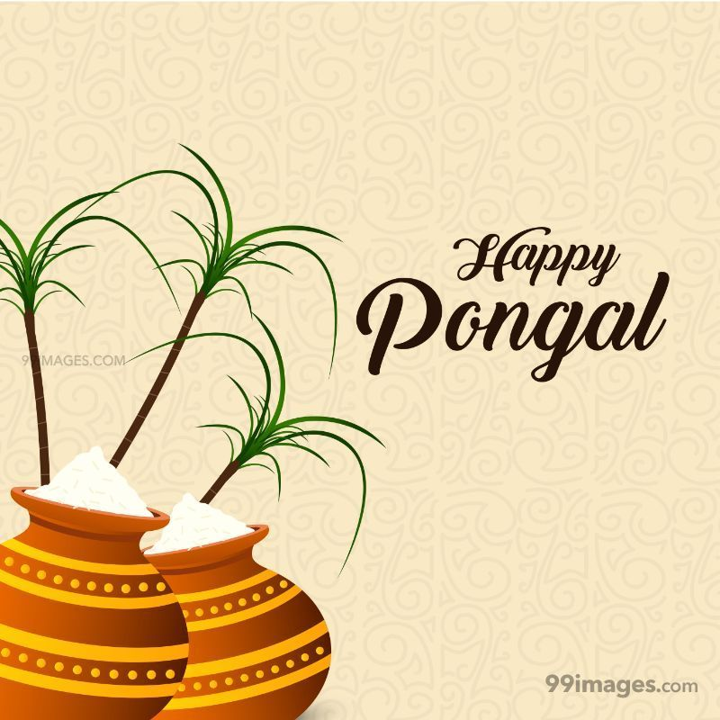 [15th January 2020] Happy Pongal (Pongal Vazhthukkal) WhatsApp DP Images, Wishes, Quotes, Messages HD (148009) - Pongal