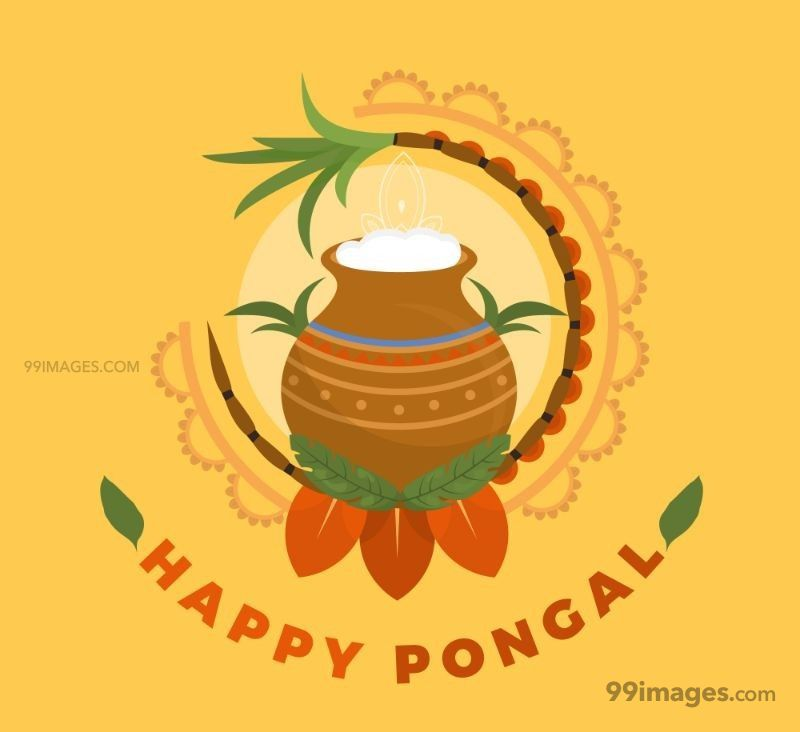 [15th January 2020] Happy Pongal (Pongal Vazhthukkal) WhatsApp DP Images, Wishes, Quotes, Messages HD (148167) - Pongal