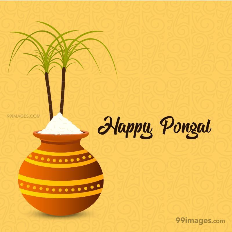 [15th January 2020] Happy Pongal (Pongal Vazhthukkal) WhatsApp DP Images, Wishes, Quotes, Messages HD (148015) - Pongal