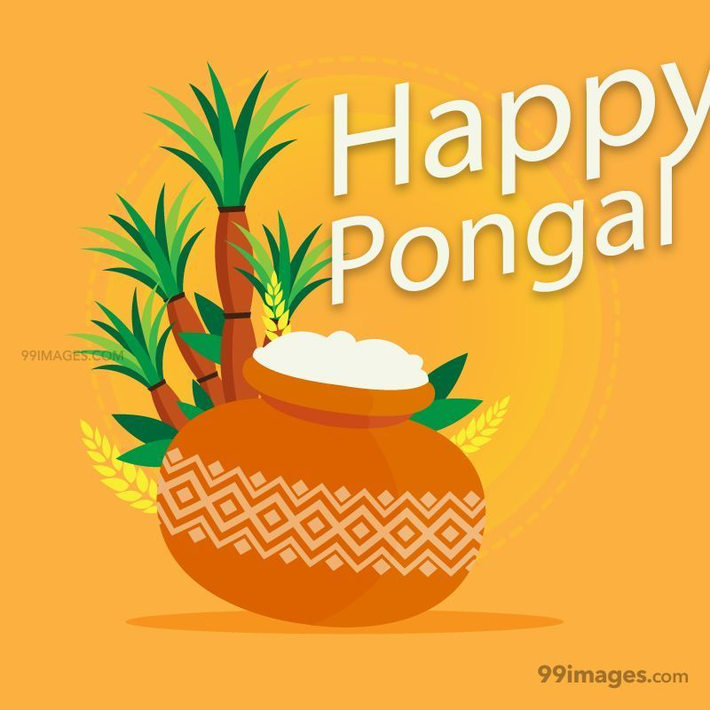 [14th January 2021] Happy Pongal (Pongal Vazhthukkal) WhatsApp DP Images, Wishes, Quotes, Messages HD (148100) - Pongal