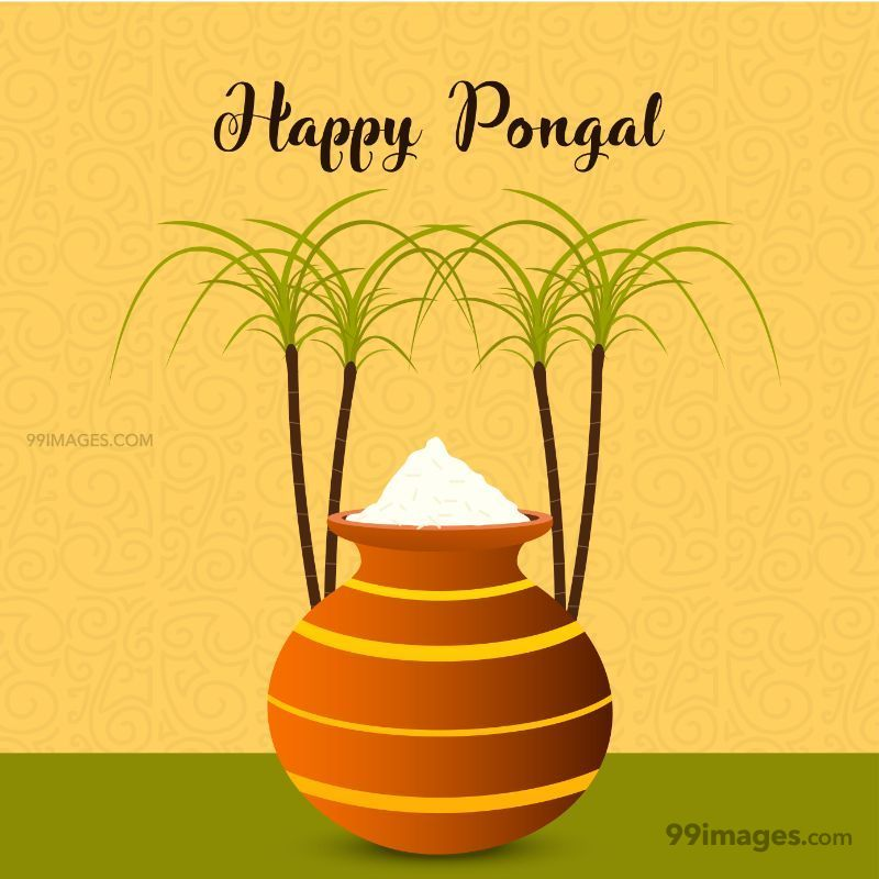 [15th January 2020] Happy Pongal (Pongal Vazhthukkal) WhatsApp DP Images, Wishes, Quotes, Messages HD (148010) - Pongal