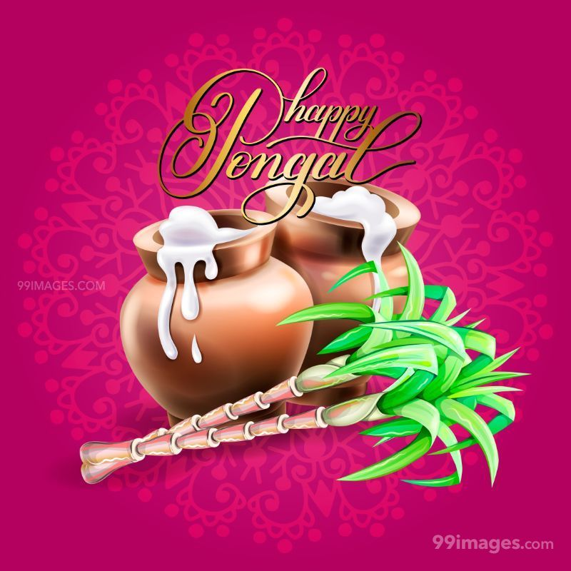 [15th January 2020] Happy Pongal (Pongal Vazhthukkal) WhatsApp DP Images, Wishes, Quotes, Messages HD (147991) - Pongal