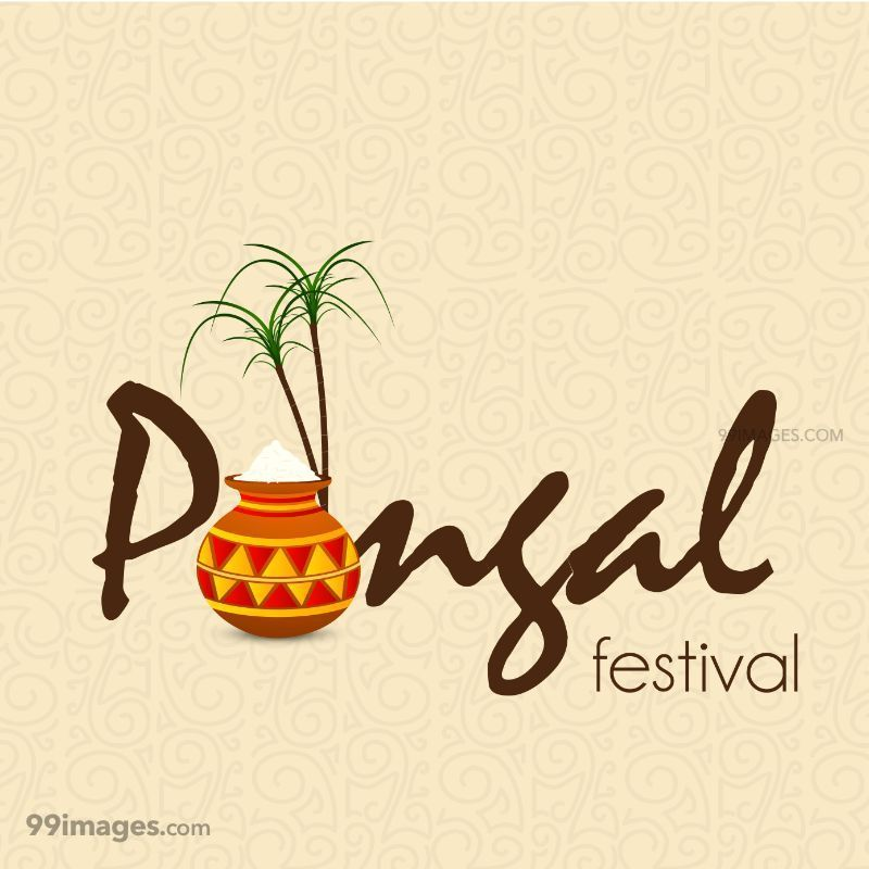 [15th January 2020] Happy Pongal (Pongal Vazhthukkal) WhatsApp DP Images, Wishes, Quotes, Messages HD (148028) - Pongal
