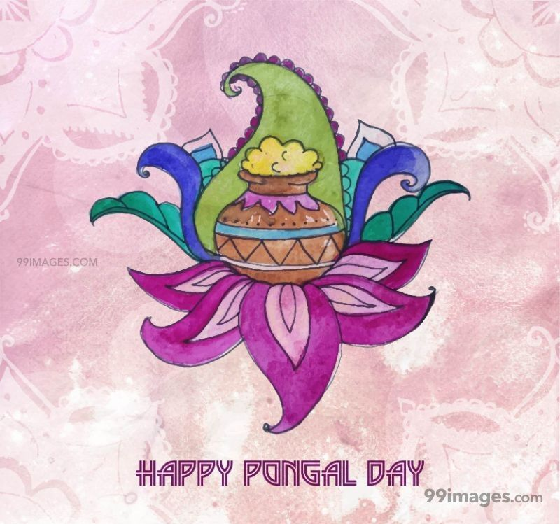 [15th January 2020] Happy Pongal (Pongal Vazhthukkal) WhatsApp DP Images, Wishes, Quotes, Messages HD (148096) - Pongal