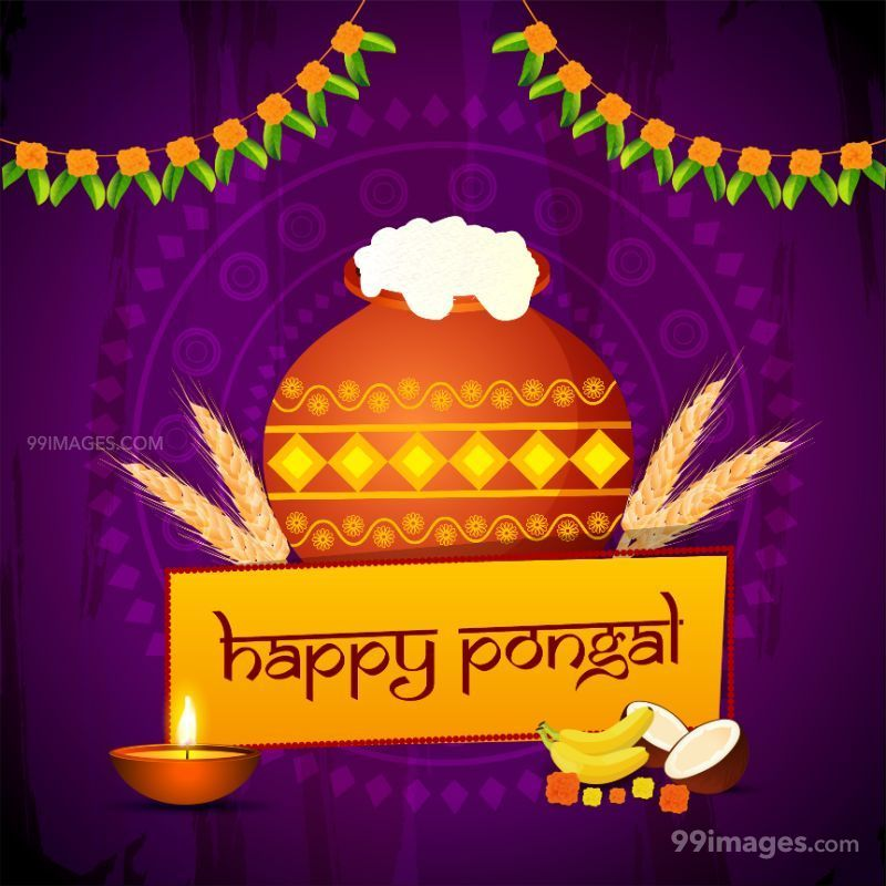 [15th January 2020] Happy Pongal (Pongal Vazhthukkal) WhatsApp DP Images, Wishes, Quotes, Messages HD (148045) - Pongal