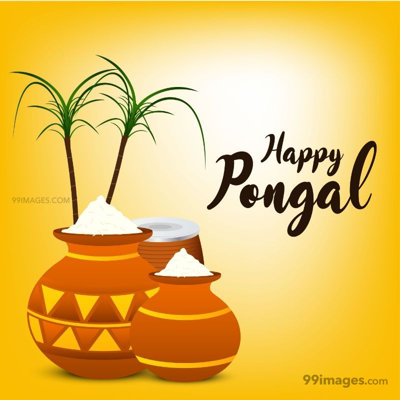 [15th January 2020] Happy Pongal (Pongal Vazhthukkal) WhatsApp DP Images, Wishes, Quotes, Messages HD (148020) - Pongal