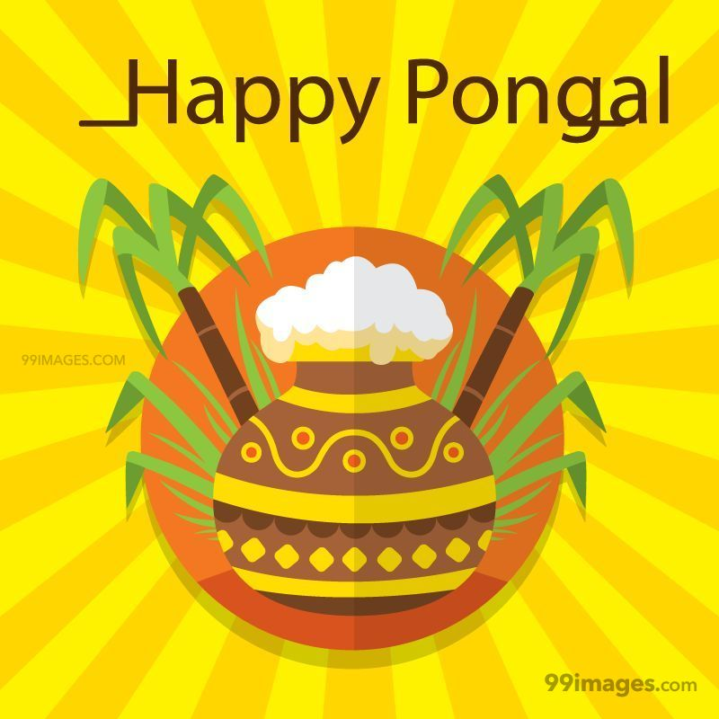 [14th January 2021] Happy Pongal (Pongal Vazhthukkal) WhatsApp DP Images, Wishes, Quotes, Messages HD (148060) - Pongal