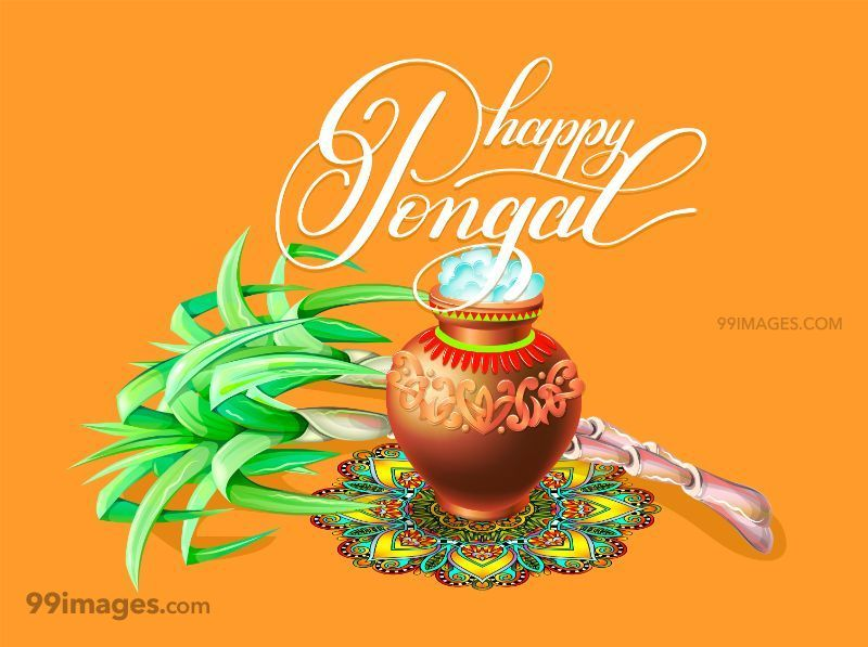 [15th January 2020] Happy Pongal (Pongal Vazhthukkal) WhatsApp DP Images, Wishes, Quotes, Messages HD (147977) - Pongal