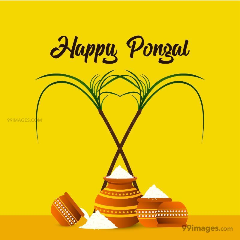[15th January 2020] Happy Pongal (Pongal Vazhthukkal) WhatsApp DP Images, Wishes, Quotes, Messages HD (148022) - Pongal