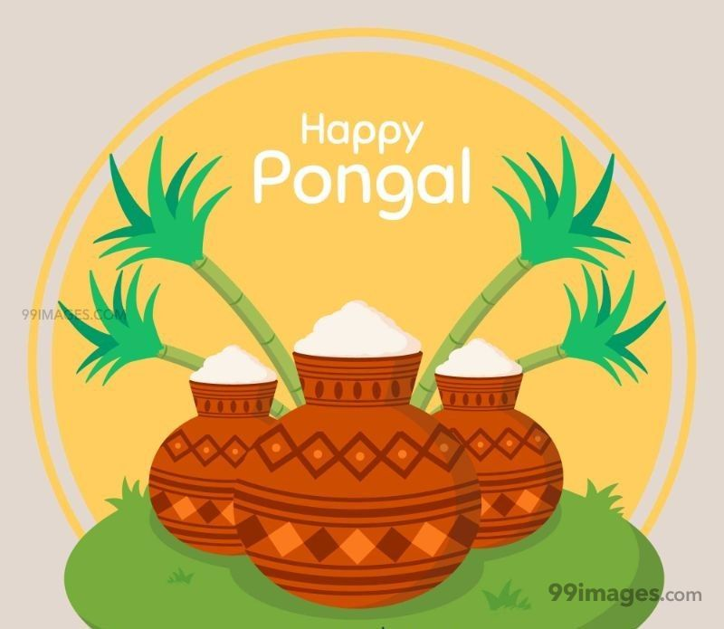 [15th January 2020] Happy Pongal (Pongal Vazhthukkal) WhatsApp DP Images, Wishes, Quotes, Messages HD (148178) - Pongal