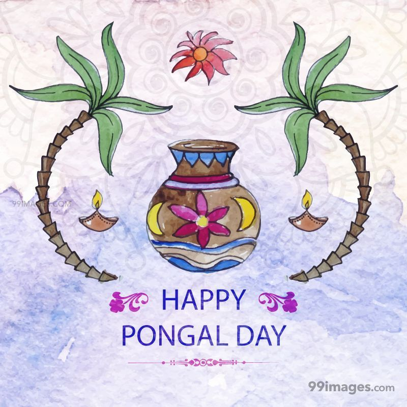 [14th January 2021] Happy Pongal (Pongal Vazhthukkal) WhatsApp DP Images, Wishes, Quotes, Messages HD (148099) - Pongal
