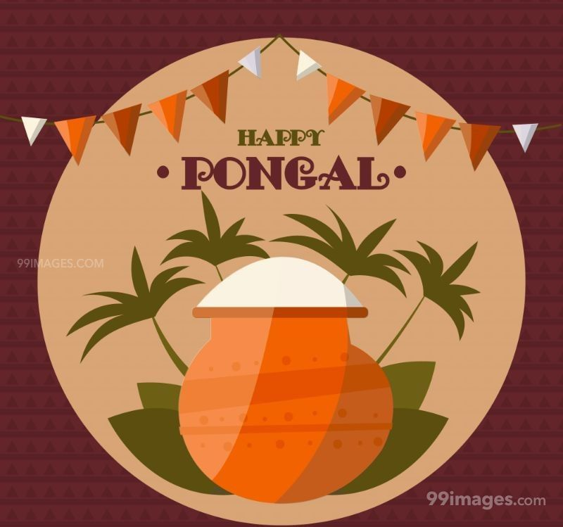 [15th January 2020] Happy Pongal (Pongal Vazhthukkal) WhatsApp DP Images, Wishes, Quotes, Messages HD (148189) - Pongal