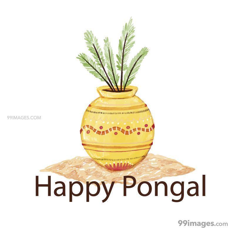 [15th January 2020] Happy Pongal (Pongal Vazhthukkal) WhatsApp DP Images, Wishes, Quotes, Messages HD (148142) - Pongal